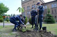 На добру згадку випускники Навчально-наукового інституту цивільного захисту посадили дерево